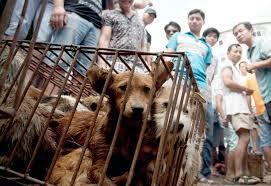 Chinese miljoenenstad verbiedt het eten van honden en katten